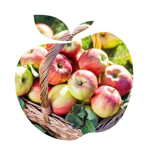 Nature de pommes